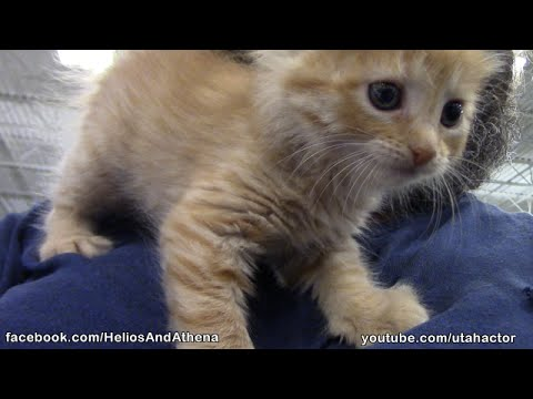 First Visit To Petsmart For Athena The Cute Ginger Kitten