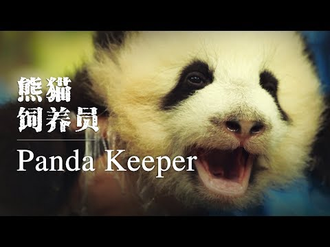 Panda keeper: The luckiest 'nanny' in the world