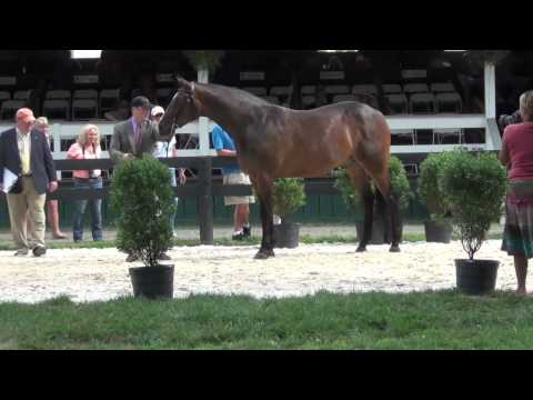 Upperville 2011 C Mahalo by Chaleon
