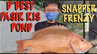 D'best Pasir Ris Pond Fishing: Sure-catch Snapper Frenzy S1Ep45