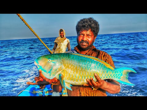 HANDLINE FISHING //CATCHING PARROT FISH, DOLPHIN FISH AND BLUDGER FISH