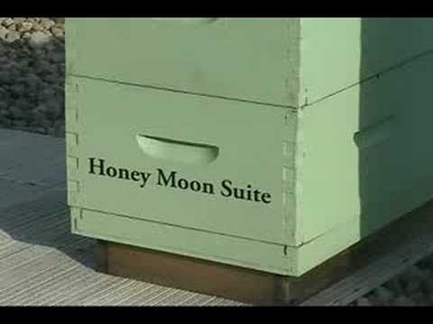 50,000 Bees reside on roof of Fairmont Royal York Hotel by Lucy Izon / Canada Cool