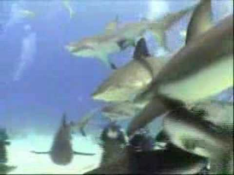 Shark Dive, Nassau 2007