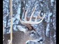 I Shot the Wrong One. Big just got Bigger. 10 yards stands a Monster