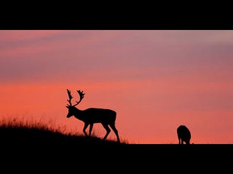 Conservation hunting Australia