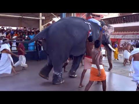 Kerala Elephant Running at Guruvayoor Temple
