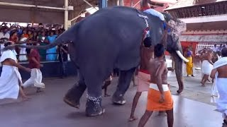 Elephant Race Celebrating in Guruvayur Temple Kerala