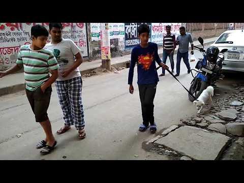 Spitz Dog Pet Doctor in Bangladesh 01912251312 @ Dr. Sagir's Pet Clinic