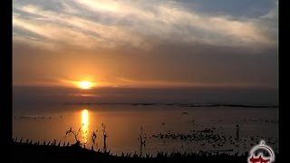 Озеро Айдаркуль. Рыбалка. Птицы Узбекистана.