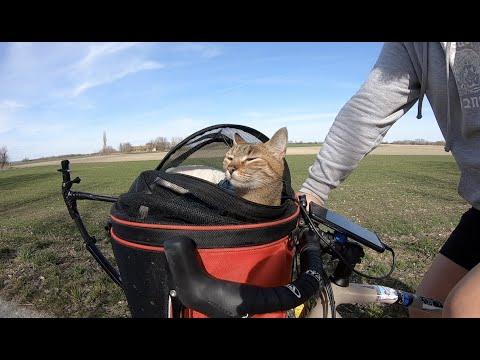 Cats bike adventure into Hungary