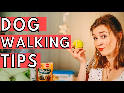 Dog Walking Tips and Tricks! | Kate Eveling
