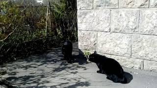 Коты весенние