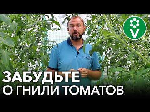 СУПЕРСМЕСЬ ОТ ВЕРШИННОЙ ГНИЛИ ТОМАТОВ! | подкормить | помидоров | вершинная | помидоры | томатов | теплице | томаты | болезн | гниль | чем