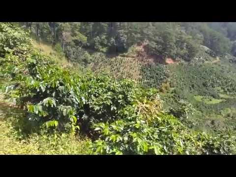 Bán đất nông nghiệp Đà Lạt cách trung tâm 5km, có 2,5hecta giá 5 tỷ 0888750318