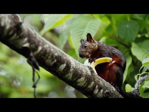 Panama-Costa Rica (Travel video). Volcanos, wildlife, nature.