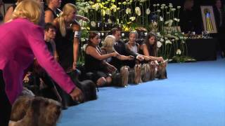 Yorkshire Terriers @ World Dog Show