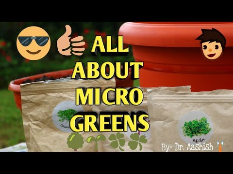 All about MICROGREENS, Indoor gardening By-Dr. Aashish | Health , Nutrition and more.