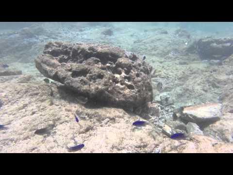 Costa Rica  underwater  salt water