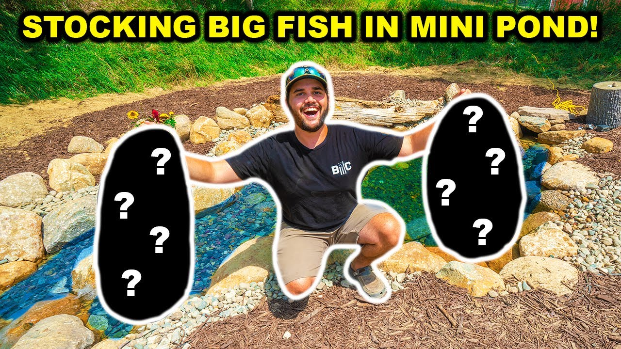 My FIRST TIME Stocking THESE Fish in My BACKYARD MINI Pond!!!