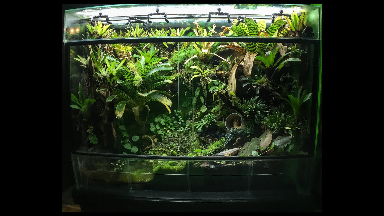 180 gallon Vivarium update  YouTube