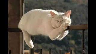💗 Best Funny and Cute Animals Moments 2019 #7 💗
