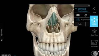 Ethmoid Anatomy17