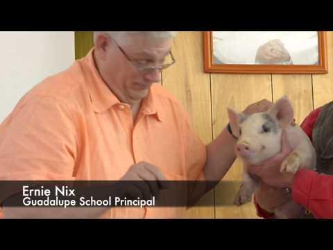 Guadalupe School principal Ernie Nix kisses a pig