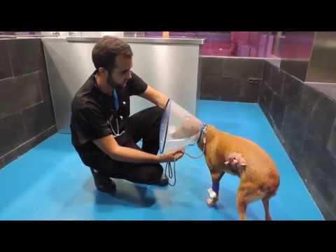 como curar una herida de perro en casa