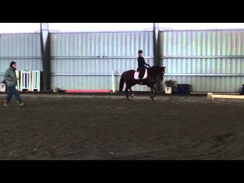 Mason dressage with Christophe Theallet  Feb 6 2016