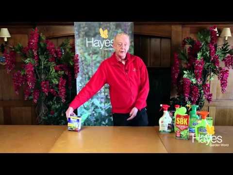 Choosing the Right Weedkiller | Hayes Garden World
