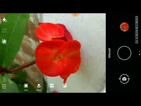 Macro Photography: Nokia 6 New Camera App