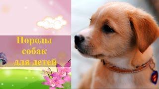 Какие есть породы собак, фото и названия. Породы собак для детей