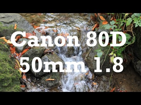 Fall - Canon EOS 80D + 50mm f1.8 STM Video
