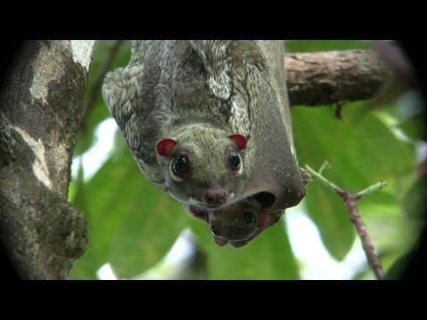 Malaysian Wildlife Youtube