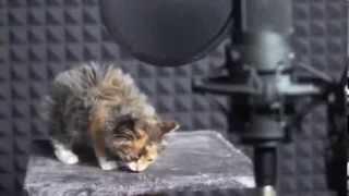 Поющие котята.