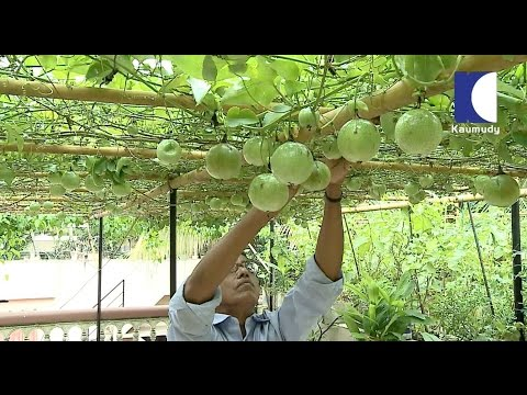 Raveendran's Splendid farm in Kerala | HARITHAM SUNDARAM 01-07-2016 | Kaumudy TV