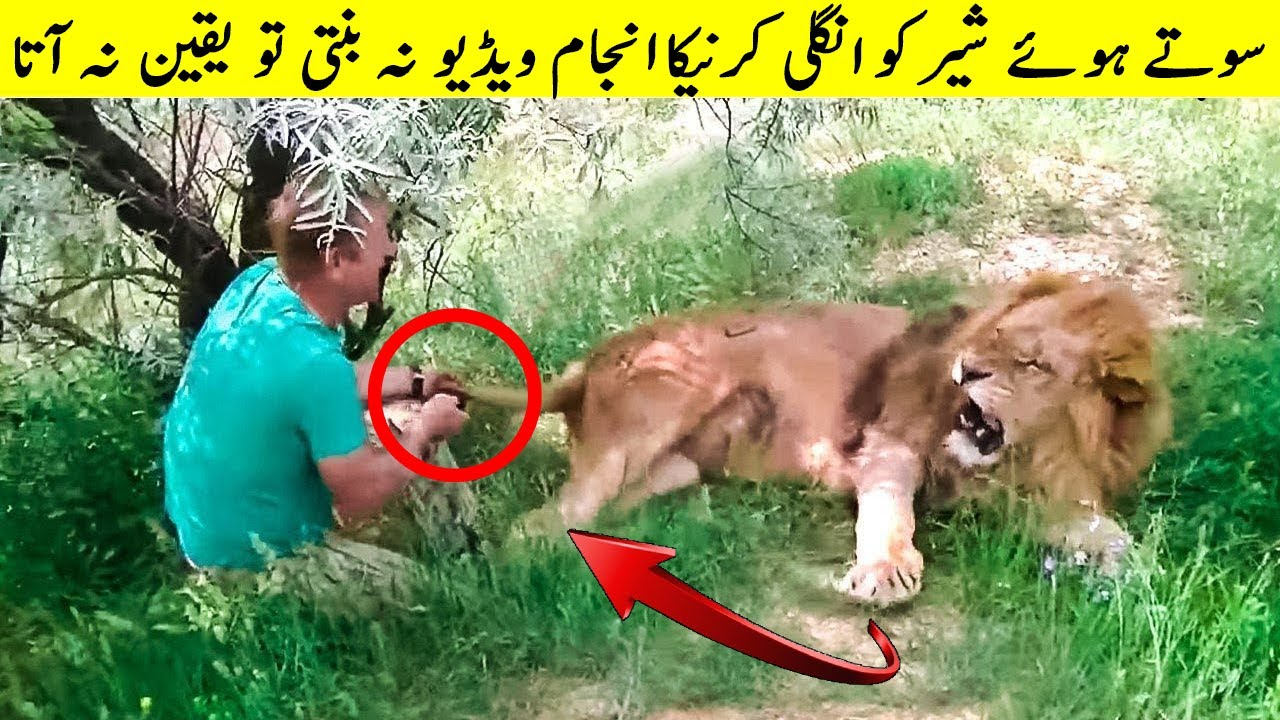 Yeh Admi Bahadur Tha Ya Pagal? Rare Animal Moments People Got On Camera