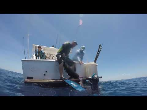 Spearfishing Panama