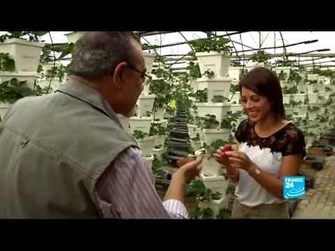 FRANCE 24 Environment - Qatar: making the desert bloom