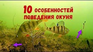10 особенностей поведения ОКУНЯ. Подводная съемка зимней рыбалки 2019. Ловля окуня в Москве реке