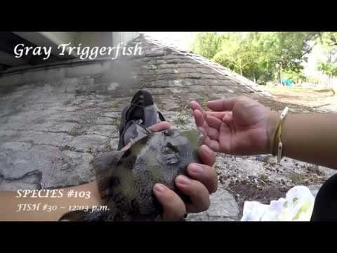 Multi-Species Fishing The Intracoastal Waterway -- Part 2 (Fort Lauderdale, FL)