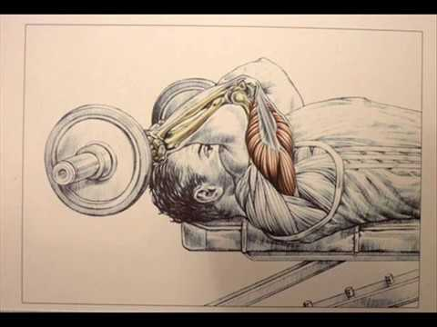 THE BEST PROGRAMME MUSCULATION :  SUPER MASS TRICEPS MOIS 1