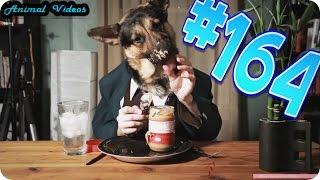 Приколы с животными №164   Собака ест мороженое  Кот и лимон  Смешные животные  Animal videos