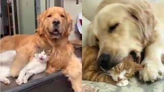 Ai bảo chó mèo không thể thân thiết | Yêu Pets
