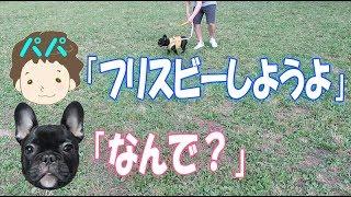 フレンチブルドッグの子犬ココです。 初めて公園でフリスビーをしました...