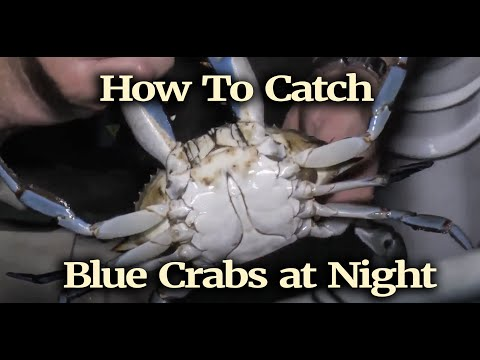 How To Catch Blue Crabs At Night