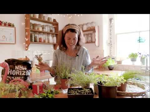 HOW TO GROW HERBS INDOORS WITH JO WEBBER