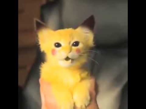 Pikachu Kitty Attacks Best Vines Youtube