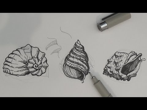 pen-and-ink-drawing-tutorials-|-how-to-draw-sea-shells