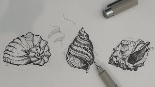 Pen and Ink Drawing Tutorials | How to draw sea shells